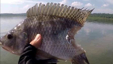 这鱼经历了什么, 不敢想象, 还是活的