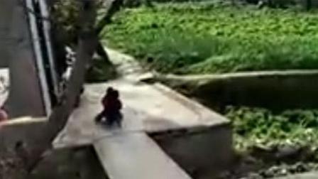 小孩飞飙滑滑车冲进菜地 家长在旁哈哈大笑