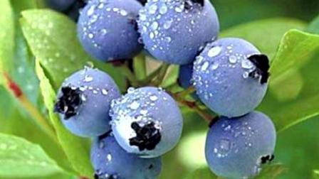 孕妈孕期吃啥水果 多吃这3种水果 宝宝不仅皮肤好眼睛还大大的