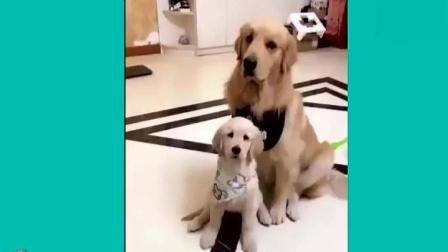 狗狗护起宝宝来可没谁了, 狗狗: 放开我的孩子有事冲我来