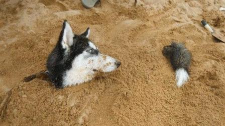 狗狗被主人埋在沙子里,好在它会神功!