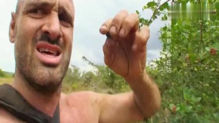 荒野求生: 德哥偶然发现颗水果树, 几百个水果被他吃掉一半