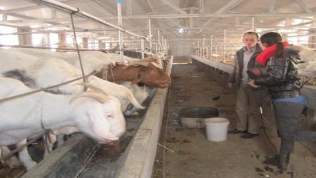 农村养殖什么家畜成本低利润高? 答案你万万想不到