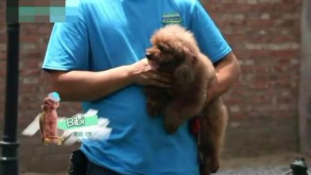 如何训练小狗 唐伟敏训狗教程 怎么训练狗狗大小便 训犬视频
