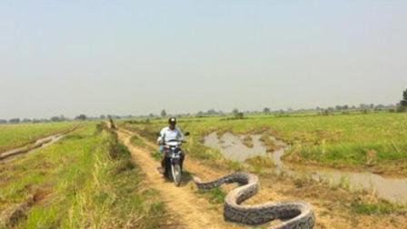 农村小伙在野外抓到了一条大蟒蛇, 没想到他却选择这样做!