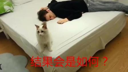 主人倒地装死, 看家里的猫是什么反应? 会求救吗