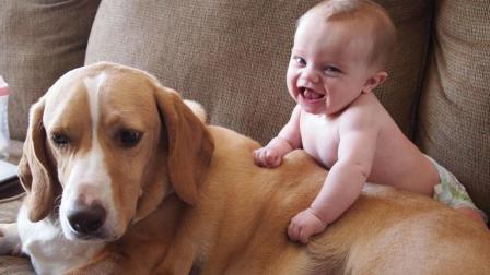 宝宝和狗狗凑在一起, 简直不能再治愈了, 狗狗还可当家教
