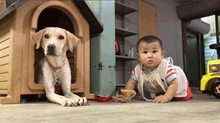 狗狗真的和小宝宝成了两兄弟啊! 天天和小宝宝形影不离, 狗狗成了最好的玩伴