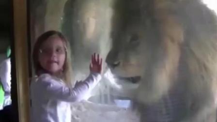 小萝莉给了狮子一个吻后,整个狮子瞬间炸裂了