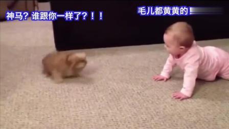 脑洞大开! 小狗与小男孩互怼, 出口成章