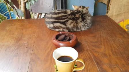 台北这家的咖啡店很有名, 他家的咖啡有黑巧克力的味道, 很有特色