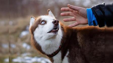 为什么千万不要摸陌生小狗的头?