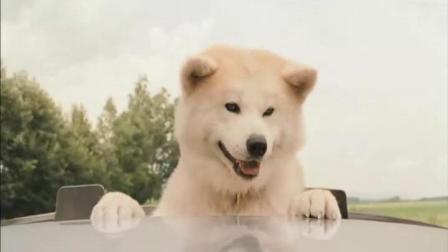 3分钟看完催泪弹电影《星守之犬》, 追寻将之人最后的足迹, 超感人!
