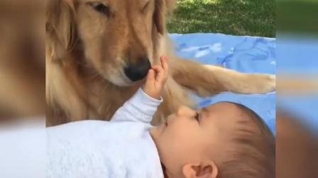 狗狗身边突然多了个婴儿, 皱着眉观察许久后, 下一秒的画面让人太感动了