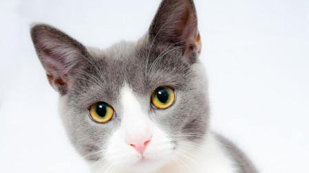 跳海草舞的网红猫 : 别人家的猫