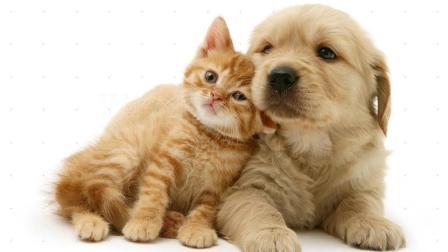 一只狗爱上2月大流浪猫, 将其叼回家, 养大它!