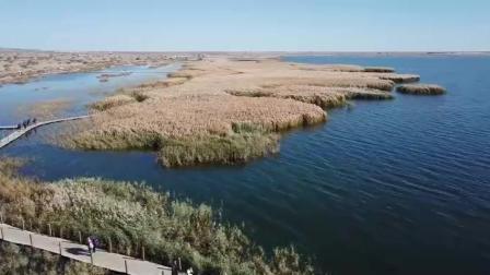 航拍额济纳的居延海, 湖边的芦苇荡太漂亮了