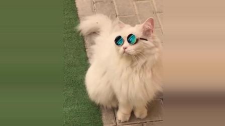 猫咪搞笑视频