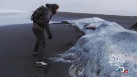 贝爷还有什么东西捡不到? 这次又捡到一只大鲸鱼!