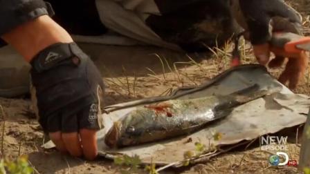 贝爷钓到一只鲈鱼, 晚餐吃铁板烤鱼啊!