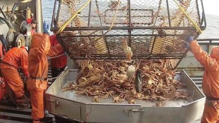 捕捞螃蟹, 这样的捕鱼工作太省心了