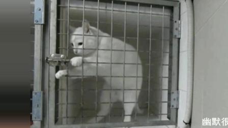 这也想困住本猫 太天真了 搞笑
