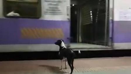 印度版忠犬八公? 流浪狗为等主人坚守车站3年!