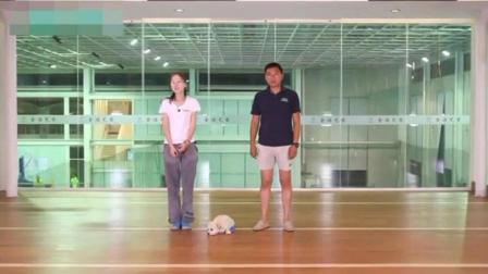 三个月狗狗怎么训练 怎么训练狗狗安静 怎么教狗狗站立