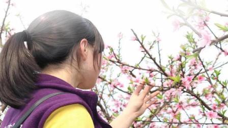 桃树保花壮果的栽培技术要点