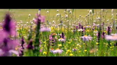 泽旺拉姆演唱阳光部落 - 动听的甘孜歌曲