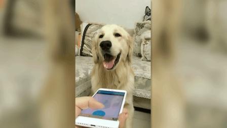 见过狗语翻译器, 却没见过这么坑的, 狗狗听到后都快要哭了!