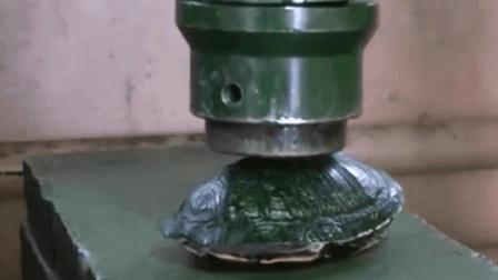 乌龟壳VS液压机, 谁能硬过谁? 结局亮了
