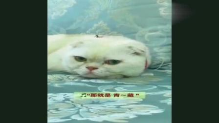 二豆被剃光头! 豆妈如此可爱! 刘二豆和瓜子搞笑猫咪配音