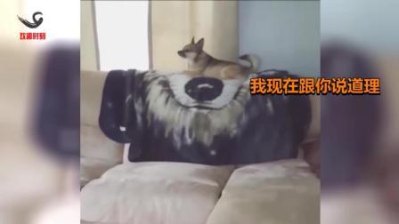 搞笑动物粤语配音第二集, 谁和我飙车我跟谁急