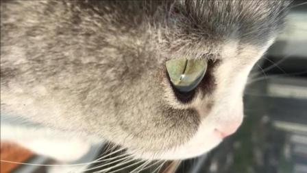 单身久了, 现在看一只猫也感觉眉清目秀的呢?