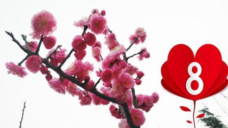 """女王节: 郑州旅拍""""桃花"""", 献给天下所有女生的花!"""