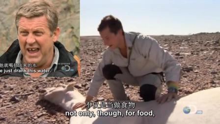 贝爷在沙漠捡到一只骆驼, 接下来的举动摄影师都看懵了!