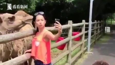 """美女上前""""无礼自拍"""" 下一秒骆驼生气张嘴咬头"""