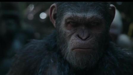 猿族领袖, 看见战后惨烈伤亡, 还冷静待见人类, 真是伟大