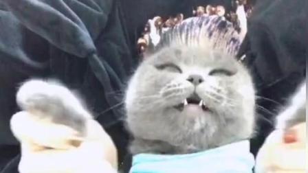 不好意思, 这才是真的猫咪跳舞, 别人家的都是假猫