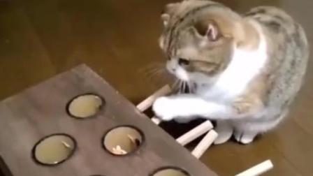 给猫咪买了个打地鼠神器, 看来玩的很开心