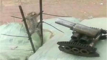 男子抓到老鼠用炮轰, 一炮下去老鼠没被打死! 被吓死了!