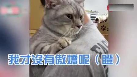 冷战中傲娇猫爱生气又想撒娇, 开口叫麻麻