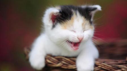 抖音集锦, 可爱的猫咪