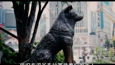 忠犬八公, 它用实际行动告诉人们, 狗狗永远是人类的朋友