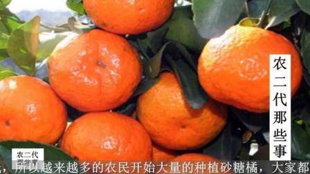 砂糖橘价格暴跌! 3个原因分析的太对了, 不看很亏!