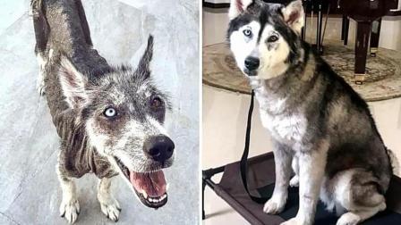 流浪狗被领养前后对比, 你不会相信这是同一条狗