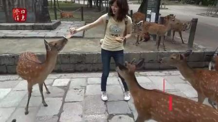 """日本奈良""""鹿咬人""""事件破纪录 7成受害者是中国人"""