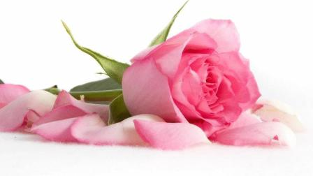 早上好, 一首《天涯海角我的都愿意》唱出爱的心声, 爱你永不变!