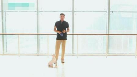 怎样训练狗狗上厕所 如何训练小狗 训犬学校哪家好